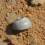 火星のお椀アイキャッチ