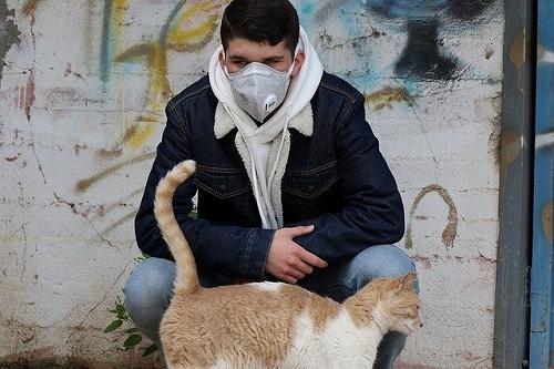 新型コロナと猫の画像