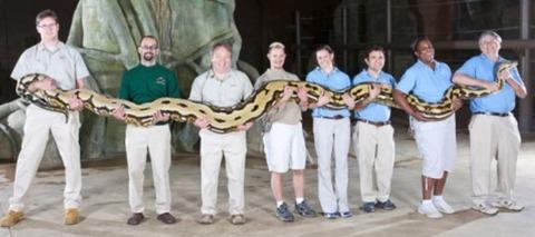 7.3mのアミメニシキヘビ持ち上げた画像