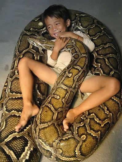 子供とくっつくニシキヘビ